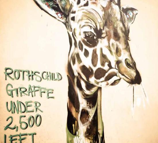 woodstock giraffe