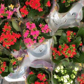 Lyon flower market